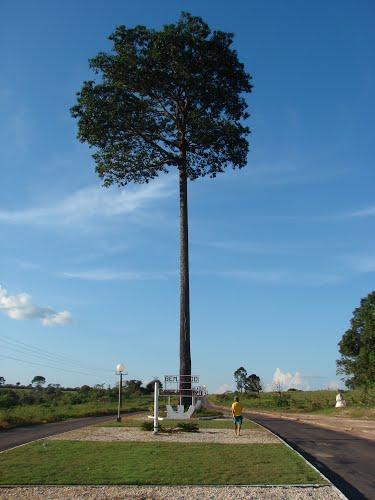 Castanheira Mato Grosso fonte: br.distanciacidades.net